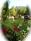 Shasta Weddings